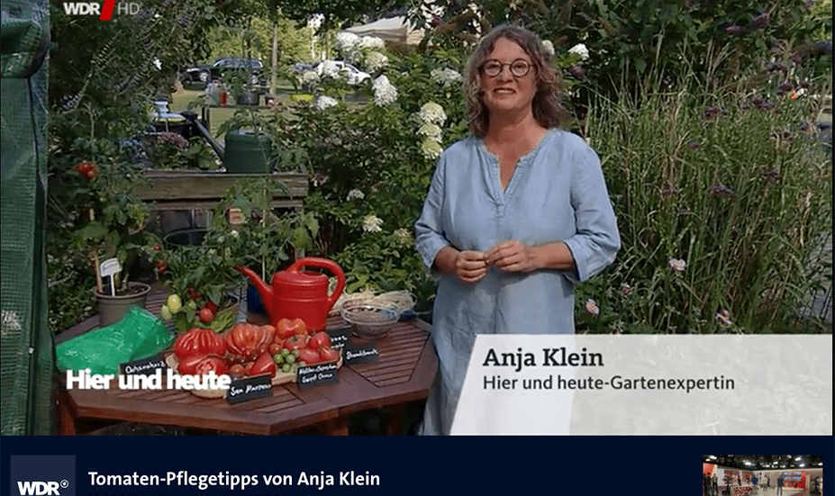 Tomaten-Pflege-Tipps Gartenexpertin Anja Klein