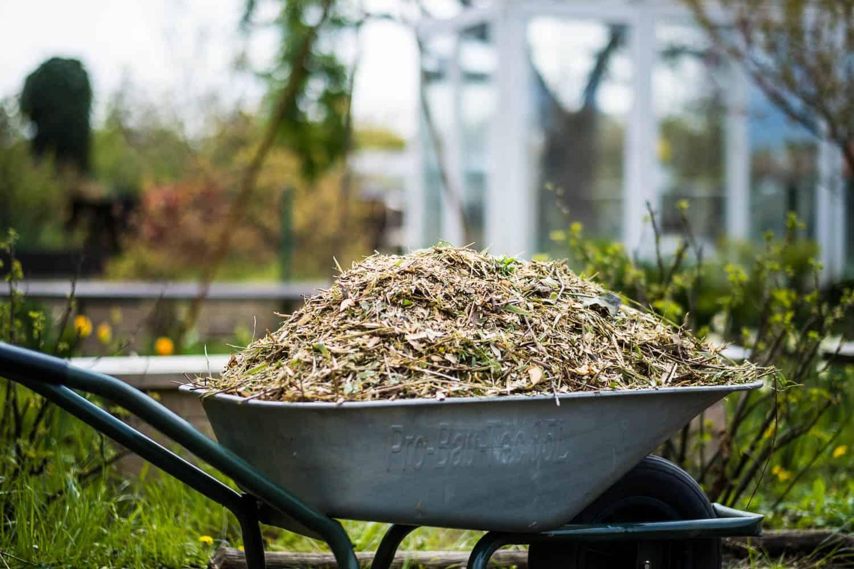 Schubkarre mit gehäckselten Gartenabfällen